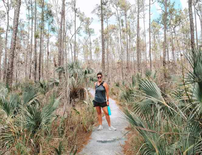 Everglades National Park Pinelands trail. This National Park Guide will tell you everything you need to know about your first visit   herlifeadventures.blog   #everglades #nationalpark #florida #travel #destinations