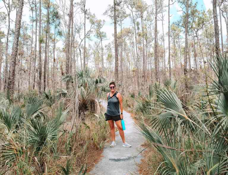 Everglades National Park Pinelands trail. This National Park Guide will tell you everything you need to know about your first visit | herlifeadventures.blog | #everglades #nationalpark #florida #travel #destinations