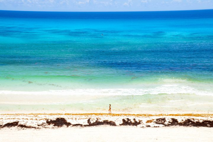 Go Snorkling with Sea Turtles  Adventurers Guide to 1 Week in Tulum - Discover where to eat, where to stay, and adventures such as Scuba diving, snorkeling, kayaking and more! Quintana Roo Mexico #mexico #travel #mexicopacking #wheretostay #hiddengem #vacation #travelguide #adventure #traveltips #northamerica #traveldestinations  #bestbeach #cenote #adventure