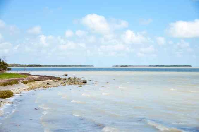 Everglades National Park paddle water #trail, and best #hikes #everglades #nationalpark #florida #wheretogo