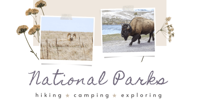 Explore dozens of amazing National Parks across the globe. Dozens of mother nature's gems can be found in each park's unique ecosystems, animals, and flora. Experience rainforests, deserts, canyons, salt flats, and beaches along your visits.