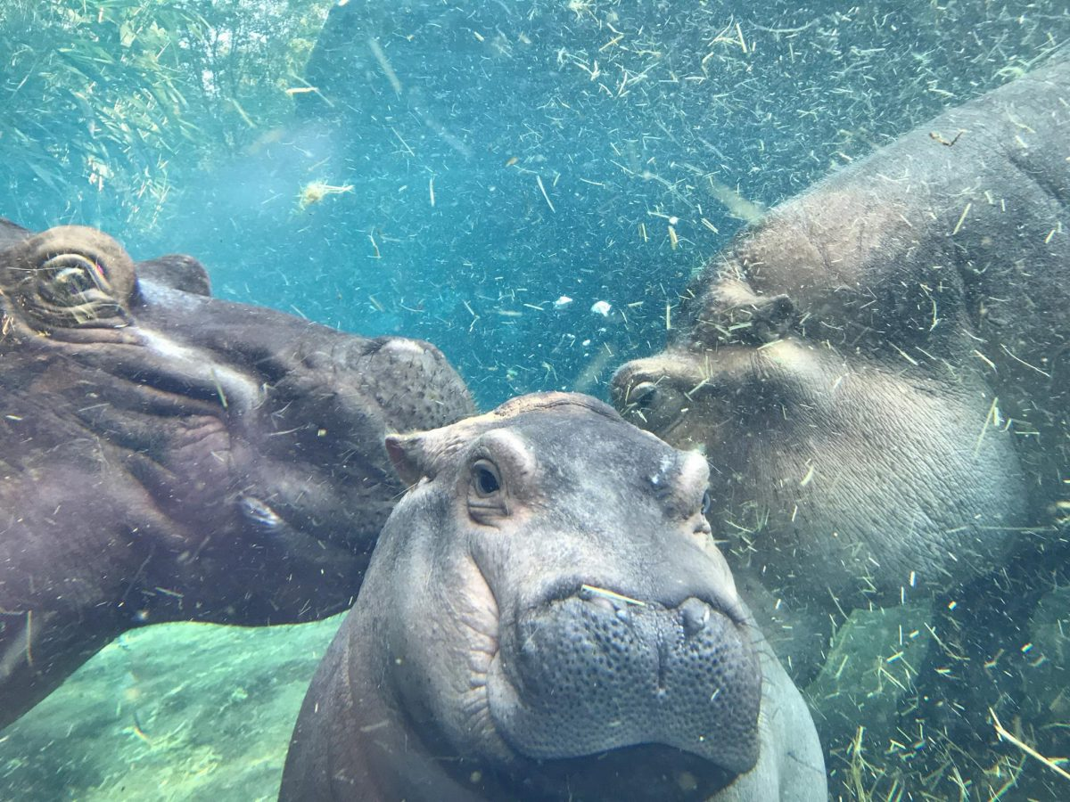 Fiona and her parents