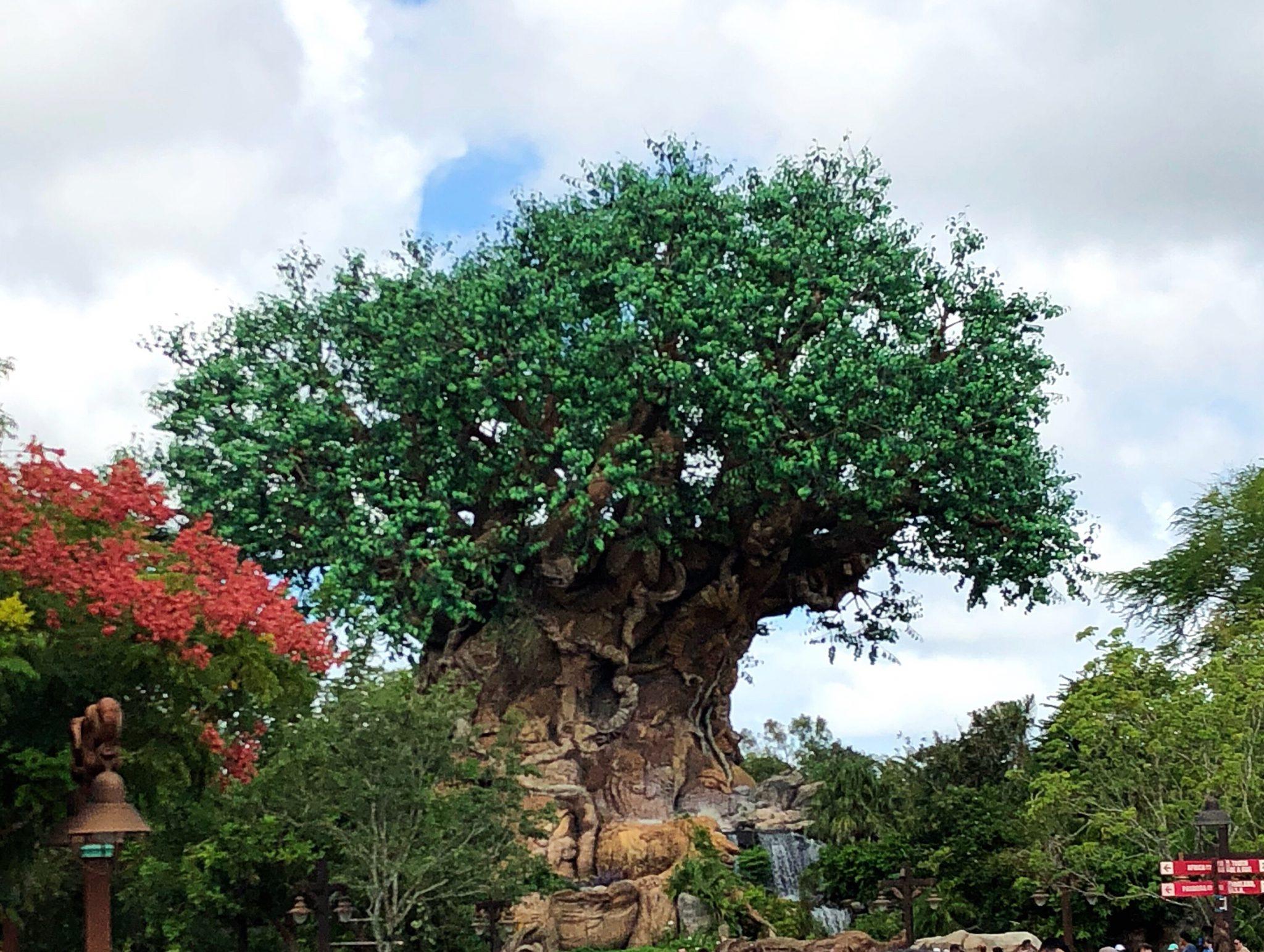 A Twentysomething's Guide to Walt Disney World: Animal Kingdom | herlifeinruins