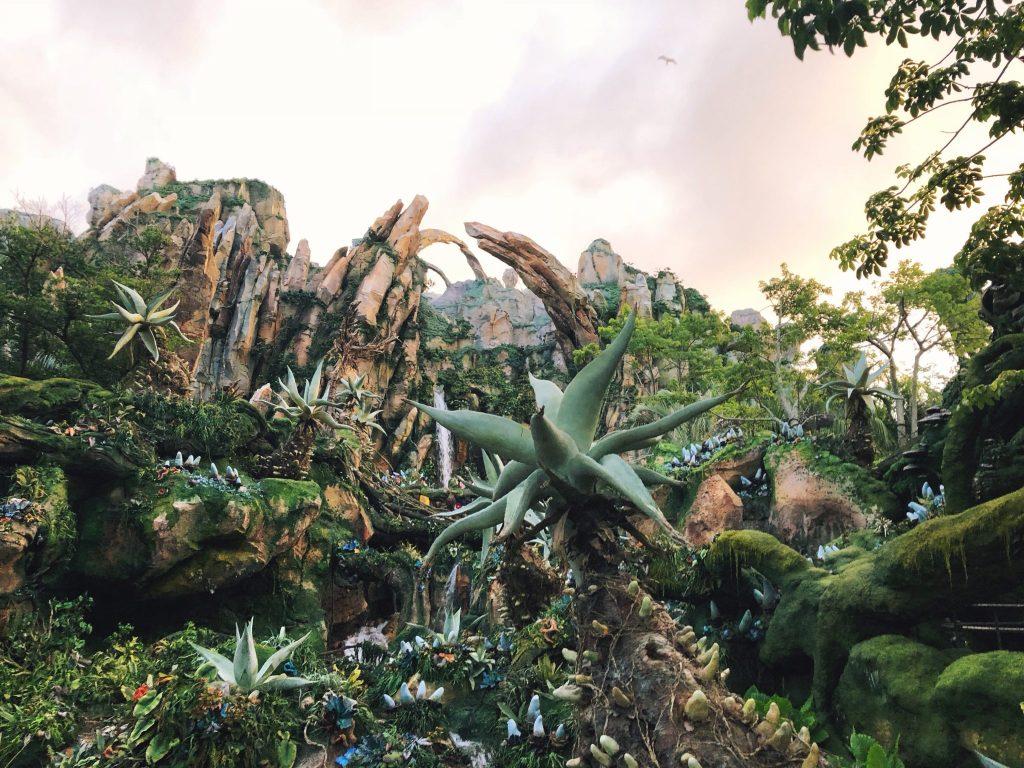 A Twentysomething's Guide to Walt Disney World: Animal Kingdom