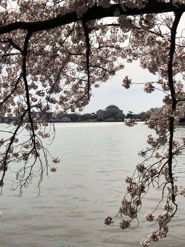 The Cherry Blossom Festival, Washington, DC