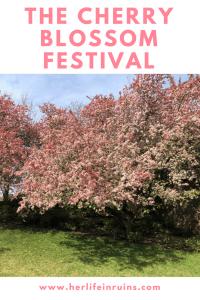 How to experience the Cherry Blossom Festival, Washington, DC