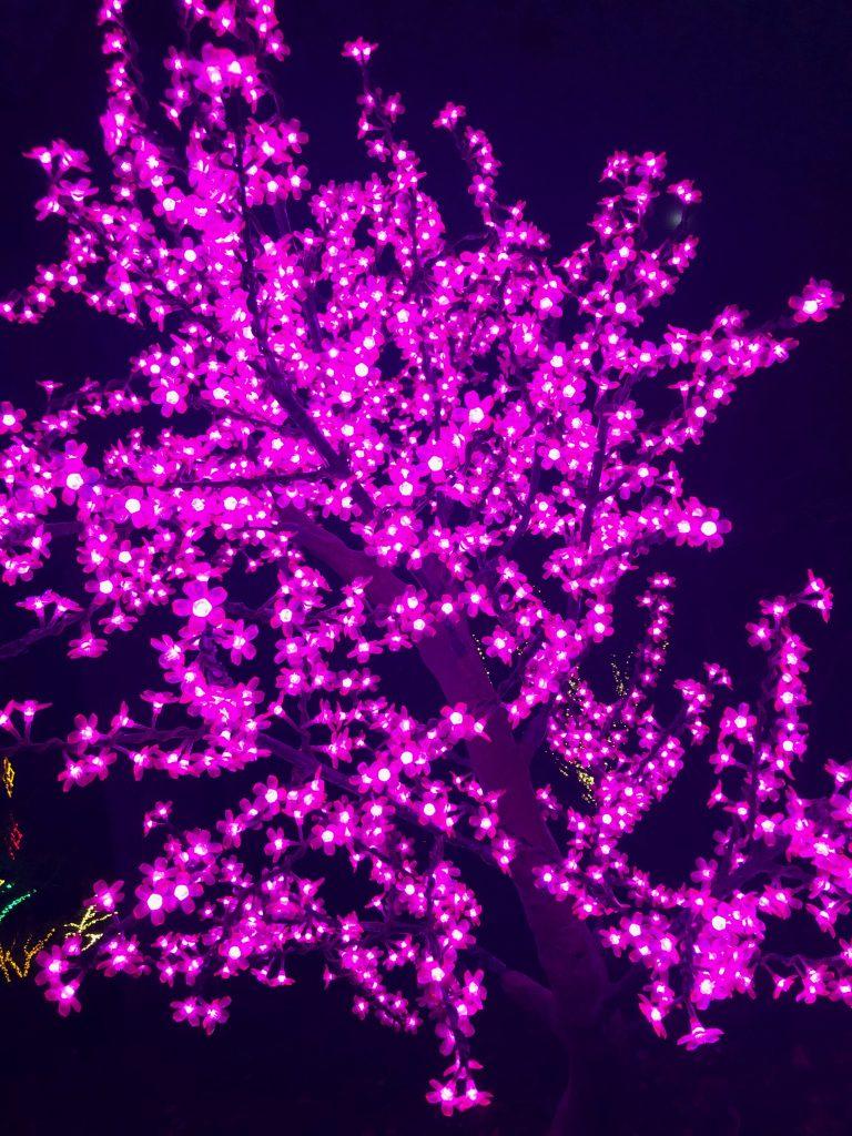 Flower Lights at Cheekwood