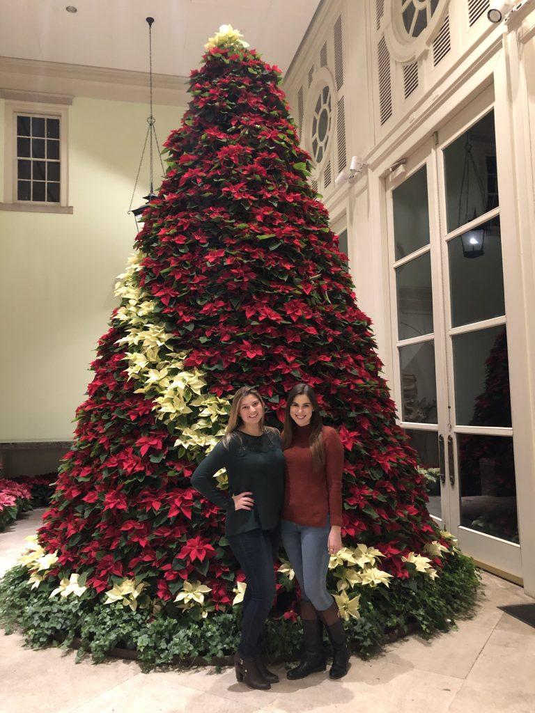 The Poinsettia Tree at Cheekwood