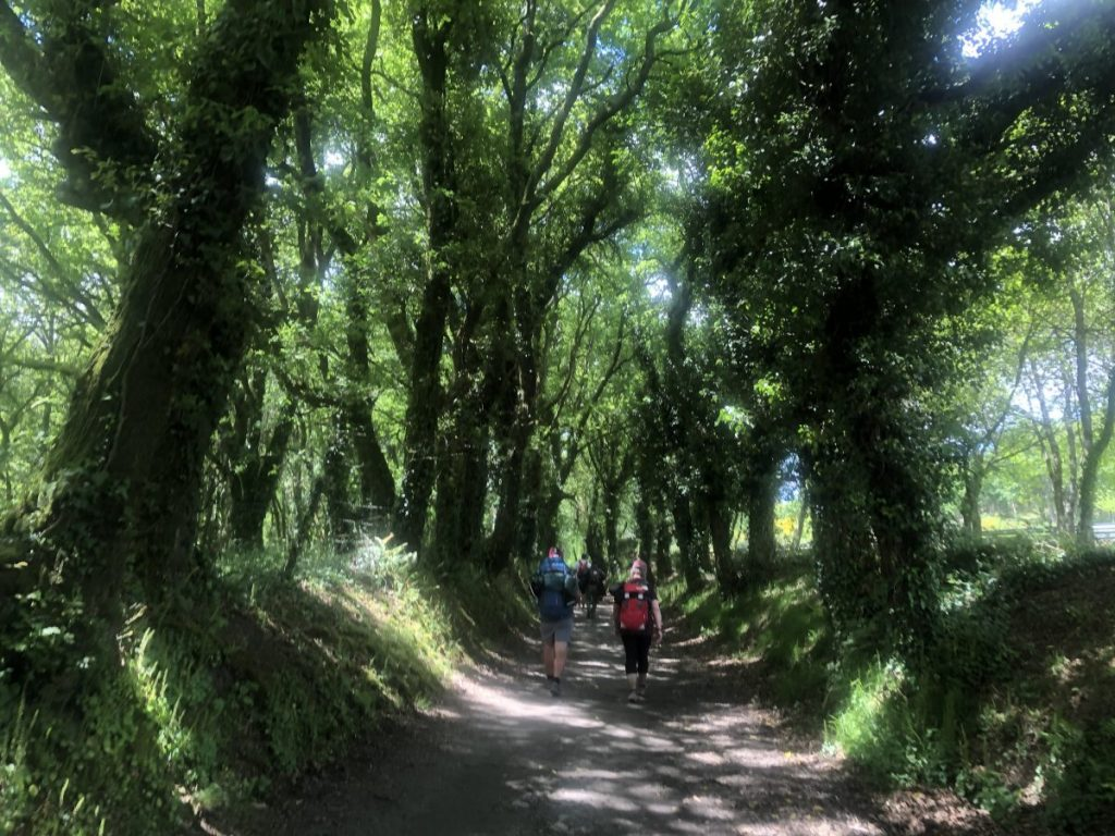 Walking through the woods in Galicia on the Camino | Her Life in Ruins