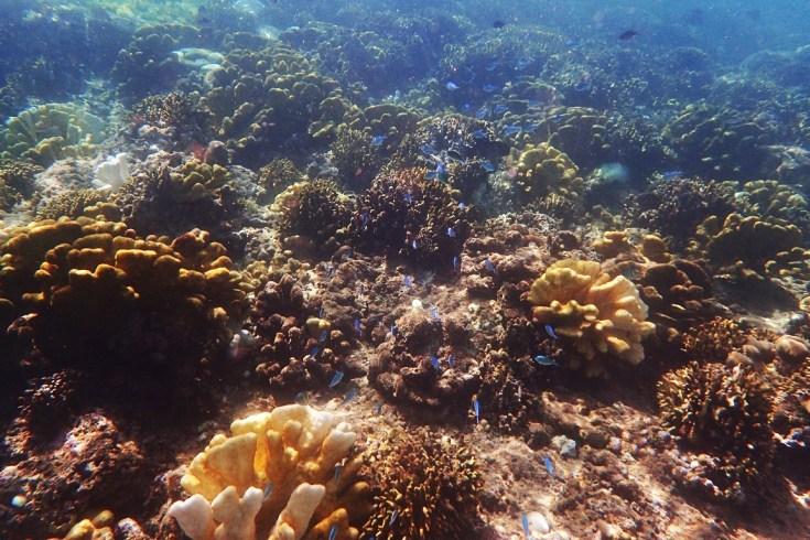 Snorkeling in Menjangan Island Bali 1