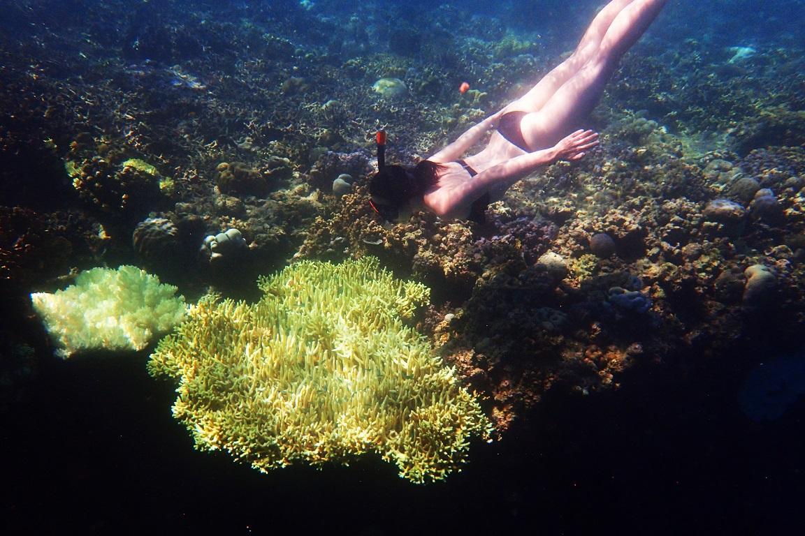 Bali Trip | Snorkeling at Menjangan Island