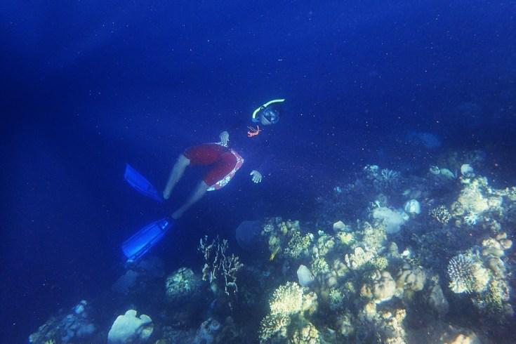 Snorkeling in Menjangan Island Bali 20