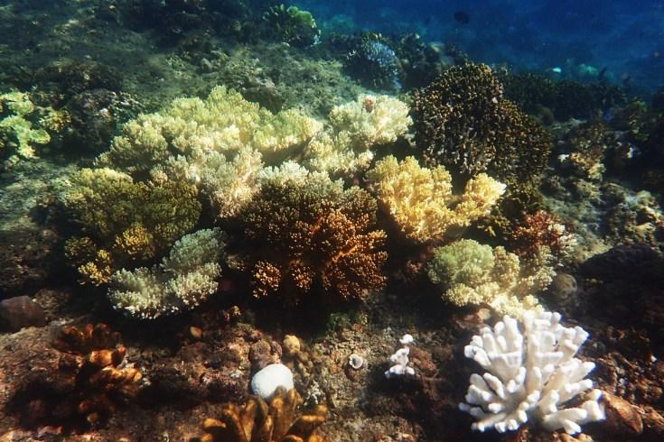 Snorkeling in Menjangan Island Bali 6