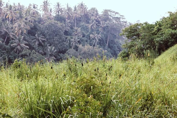 Campuhan Ridge Ubud (16)