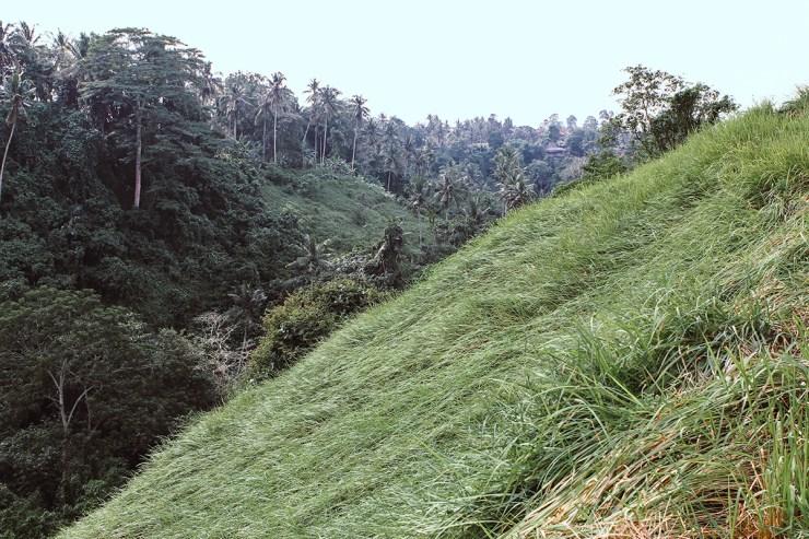Campuhan Ridge Ubud (21)