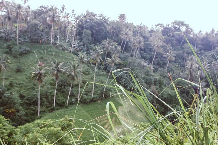 Campuhan Ridge Ubud (23)