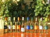 Wein-Sortiment