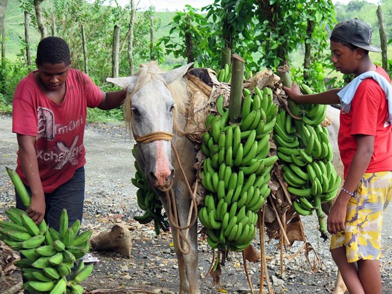 Los Guineos 10
