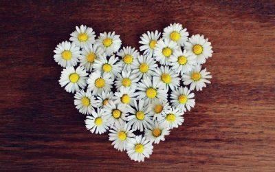 Hjärtat är kroppens guide