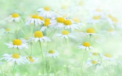 Vad behöver du för att blomma?
