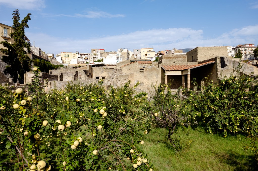 An orchard with ancient Herculaneum and the modern city beyond it.