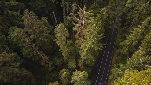 High Angle View Of Mountain Road Amidst Trees In Redwood Forest
