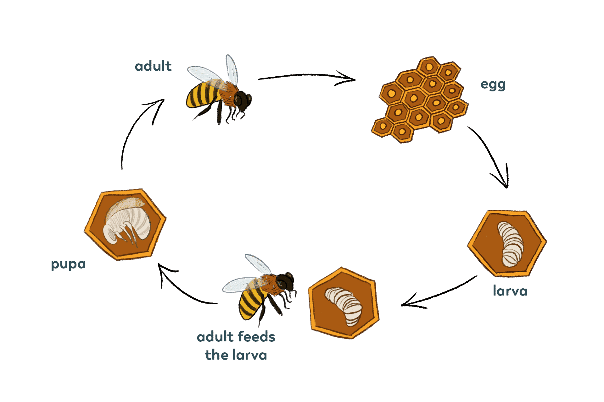 Life Cycle Pollinator Quest