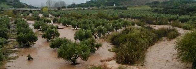 Olivar inundado (2)