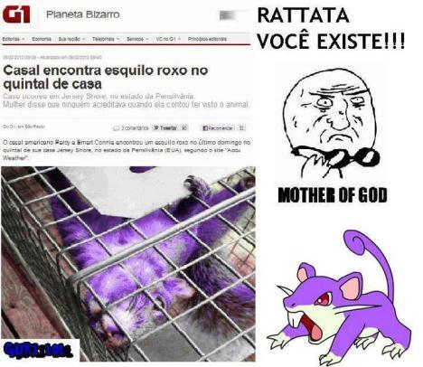Rattata pokemon real