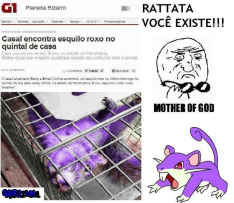 Rattata pokemon real