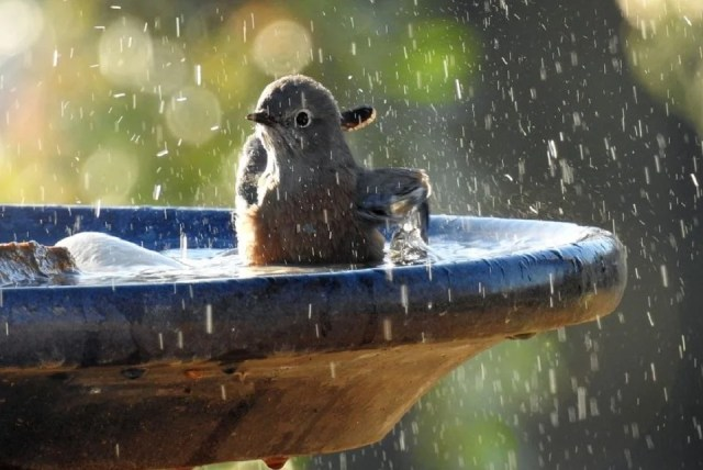 Fontaine pour bain d'oiseaux
