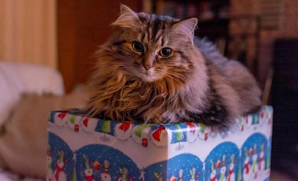 Le cadeau pour chat, une attention approuvée par Minetn