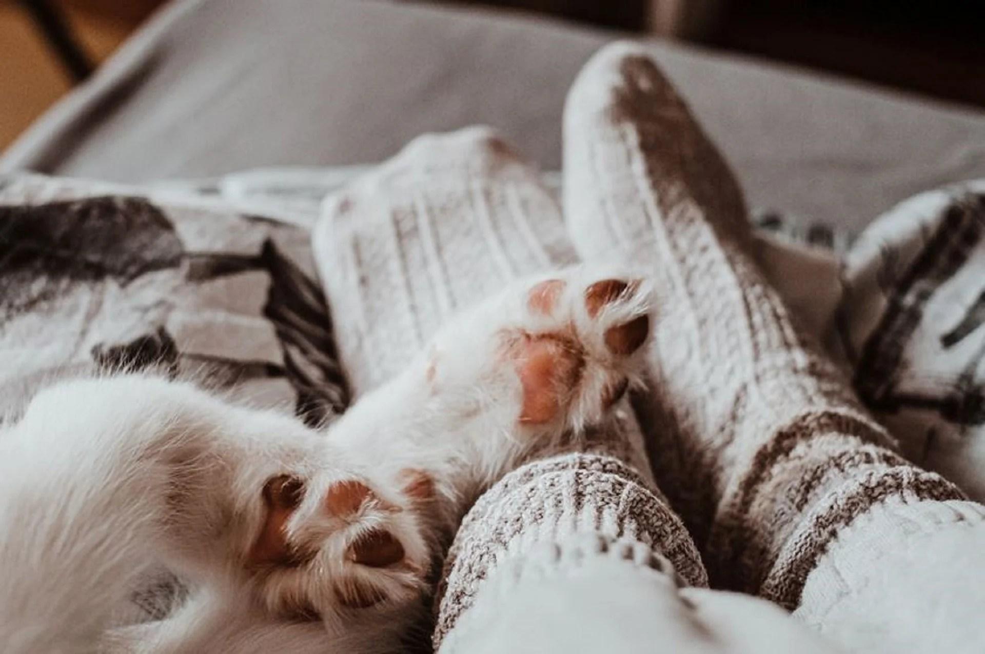 chaussettes chaudes : mi-bas épais ou socquette fine, que choisir ?