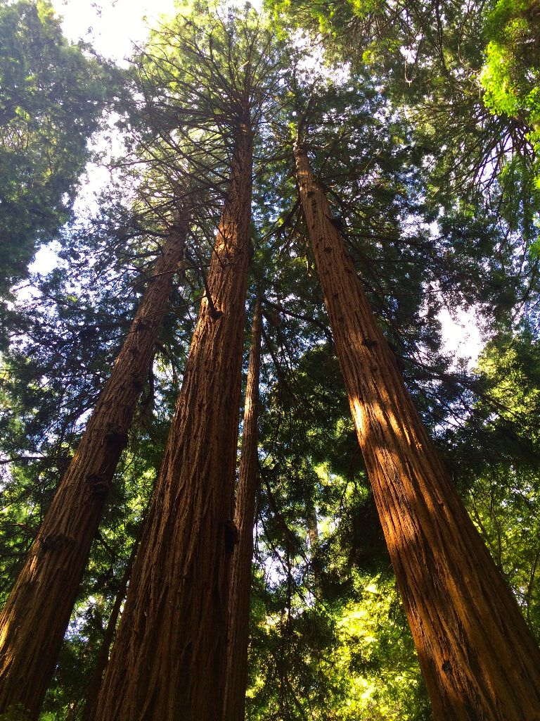 how to make the most of muir woods