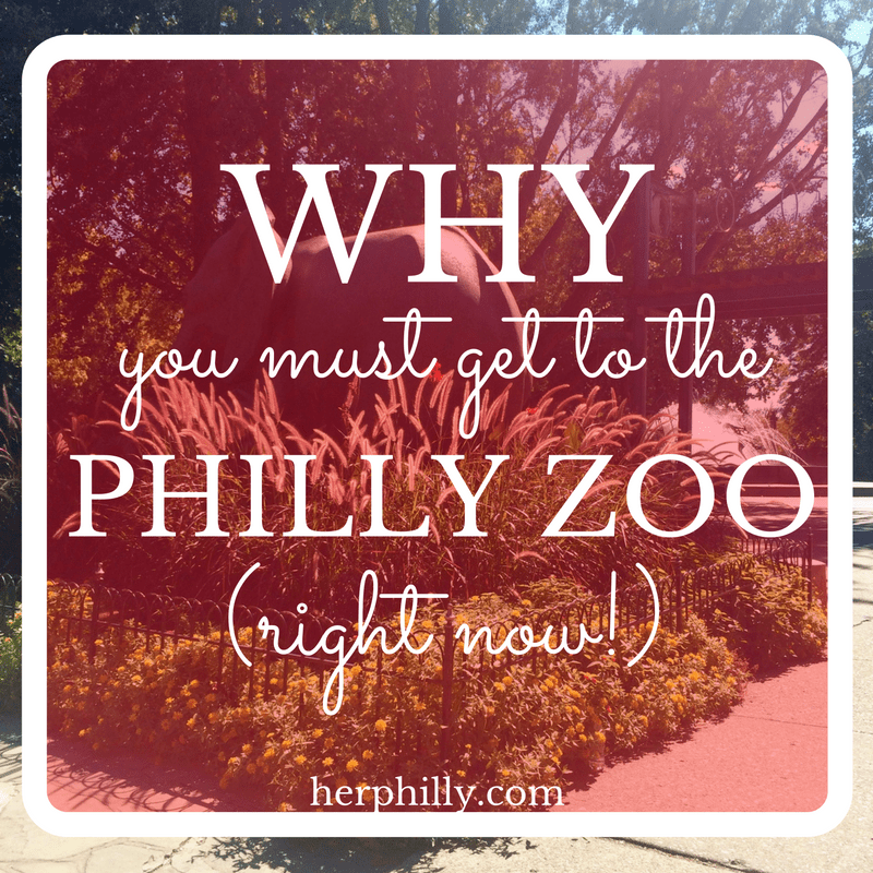 Visiting the Philly Zoo Fall 2016