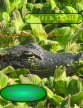 Herpetoculture House Digital Reptiles Magazine Vol 1 Issue 5