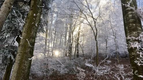 Ein Sonnenstrahl im frostigen Wald.