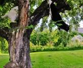 Pollux skrämmer Pixie ur ett träd