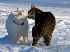 Är det en snögubbe eller Pollux, åh... hej Polle!