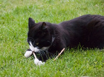 Pixie har hittat en liten pinne