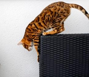 Min lille leopard