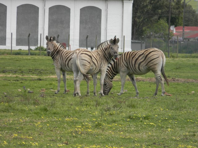 We even spotted a few Zebras!