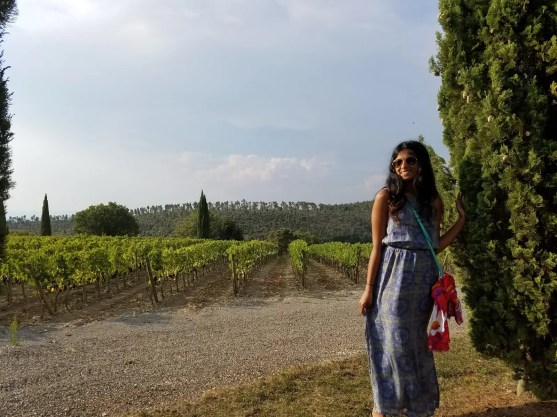 Beatuiful Montalcino Vineyards
