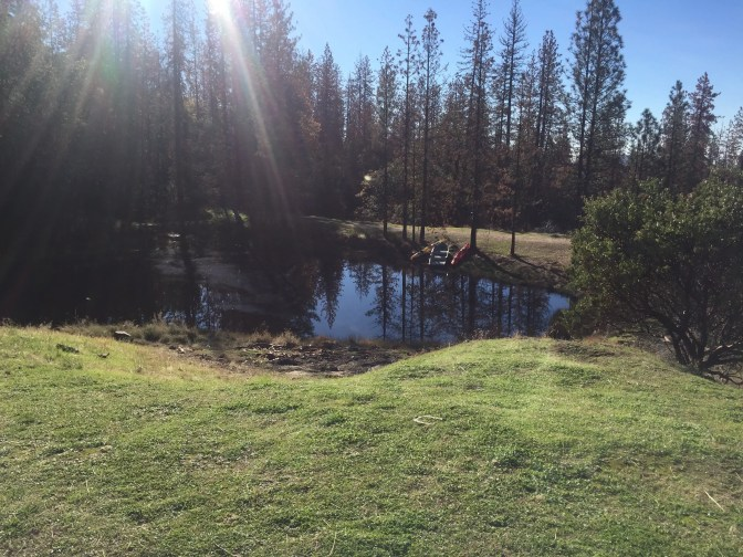 Tiny pond