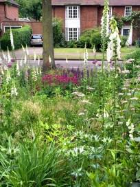 Front garden white foxgloves