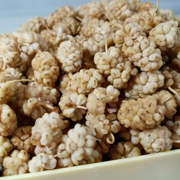 poturge-dut-kurusu-2