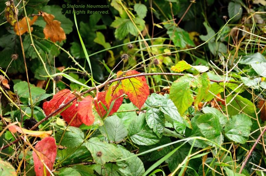 Happy Samhain & Going for a Walk_OF 02 © Stefanie Neumann - All Rights Reserved. #KokopelliBeeFree, #KBFPhotography, #KBFWalk