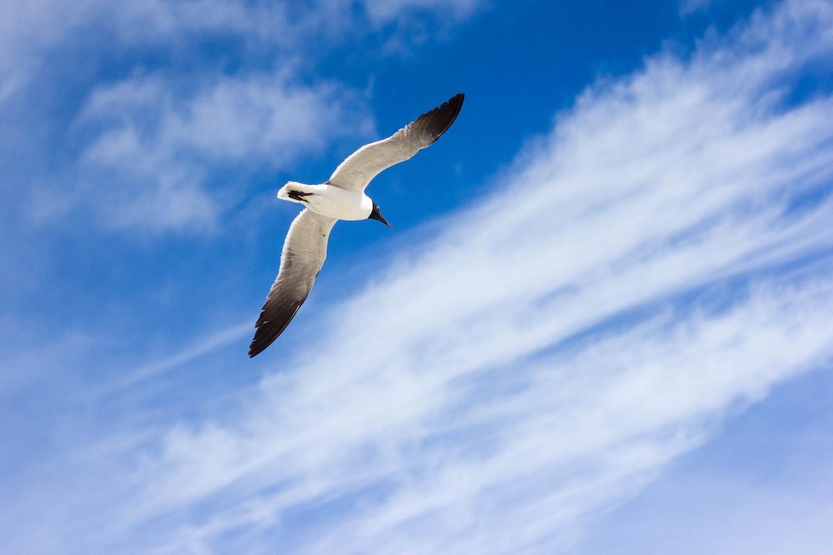 Vogel am Himmel