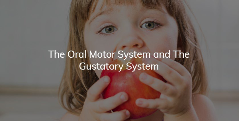 The Oral Motor System