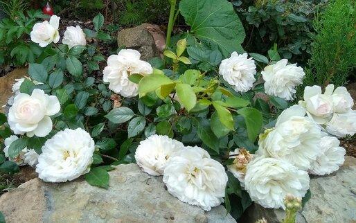 Weinproben in Hessigheim Weinprobe en blanc die weiße Weinrpobe Weißweine weiße Deko weiße Blumen